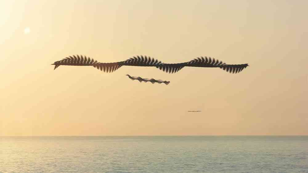Xavi Bou's 'Ornitografías': If birds left tracks in the sky...