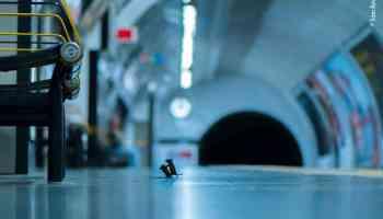 Subway mice wins People's Choice Wildlife Photographer of the Year award