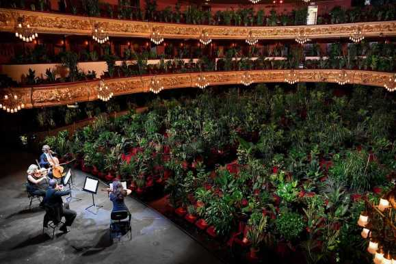 Oxygen in the house: Barcelona opera house reopens with performance to over 2,000 plants