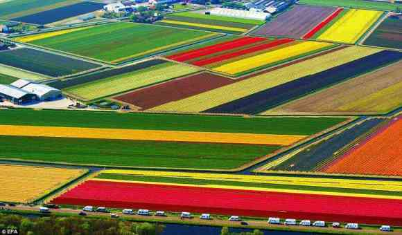 Aerial views of the tulip fields of Lisse
