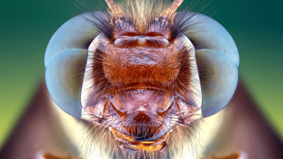 Owlflies: The oddball of an insect