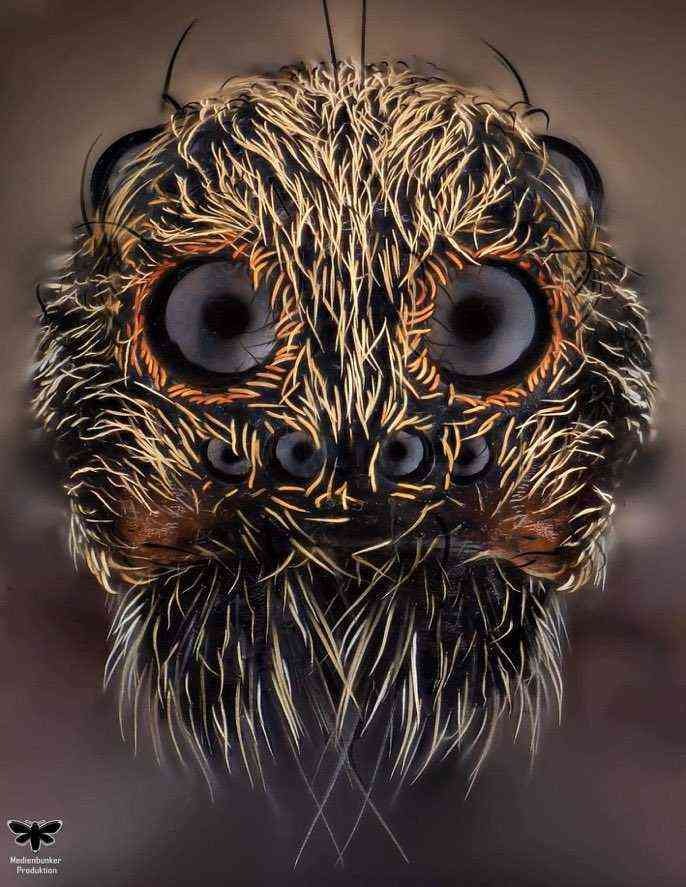 Extreme close-up of a Wolf Spider