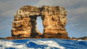 Darwin's Arch