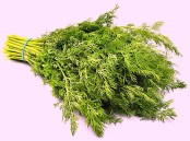 Do not add fresh basil and dill to your dish while cooking. Add it at the end of cooking, just before removing from the flame, or they will lose their aroma.