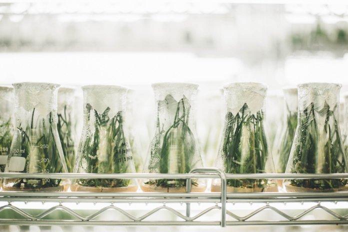 De ciencia a pseudociencia, las falacias del saber