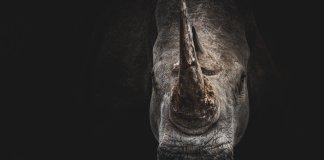 Contra los rinocerontes