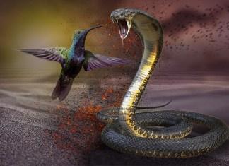 Sobrevivir a la era del 'Efecto cobra'