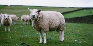 Las contradicciones del animalismo