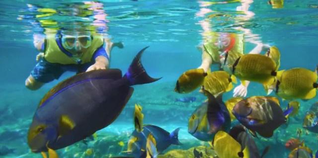 Snorkeling Aulani