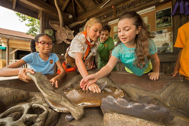 8 Fantastic Ways to Celebrate Animal Kingdom During Special Anniversary Festivities