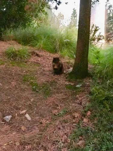 Francisco Cat from Disneyland