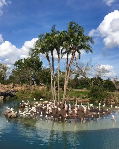 Celebrating the Anniversary of Kilimanjaro Safaris 3