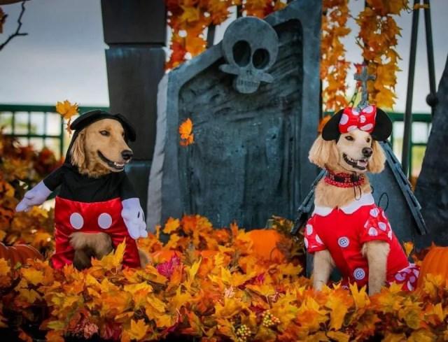 disney halloween fashion dogs