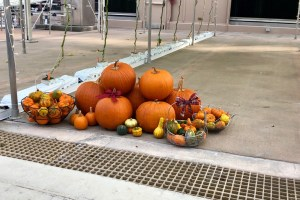 Pumpkins - Living with the Land