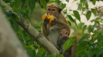 Disneynature Monkey Kingdom 5