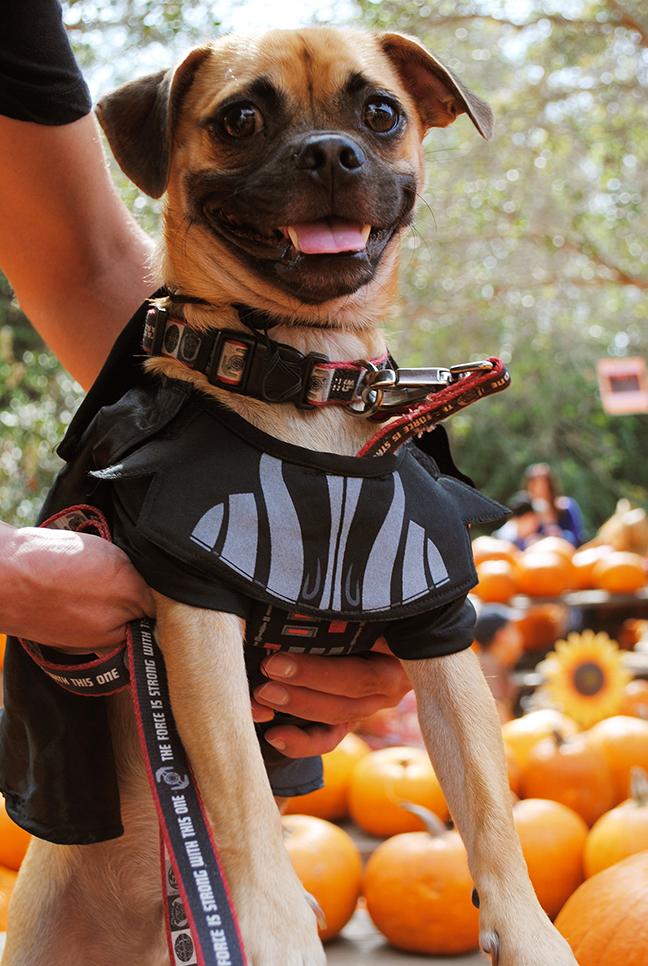 Disney Halloween Pet Costumes Darth Vader