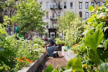 east-harlem-community-garden-plots-2