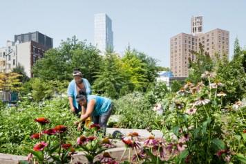 east-harlem-community-garden-plots
