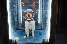 Guardians of the Galaxy Mission BREAKOUT Grand Opening CCCP Dog