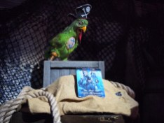 Walt Disney Archives Pavilion Pirates D23 Expo Star Wars Parrot