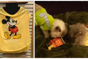 Disney Pet Tees