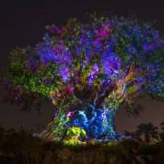 Disney Animal Kingdom Night Hours Extended Starting in May