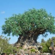Happy Birthday Disney's Animal Kingdom!