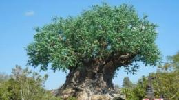 disney animal kingdom news