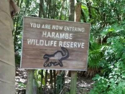 Kilimanjaro Safaris (Disney World Ride)