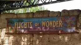 Flights of Wonder Disney World