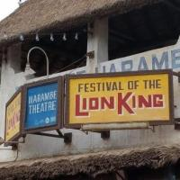 Festival of the Lion King (Disney World Show)