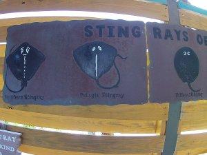 stingray castaway cay