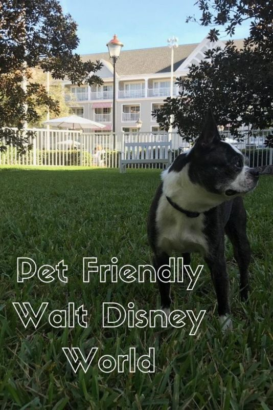 Did you know you can bring your pet to Walt Disney World? Find details here! #waltdisneyworld #petfriendly #dogfriendly #dog #pet #copley