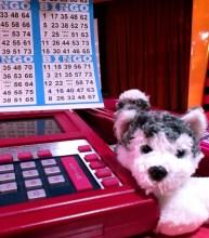 Gambling on disney cruise