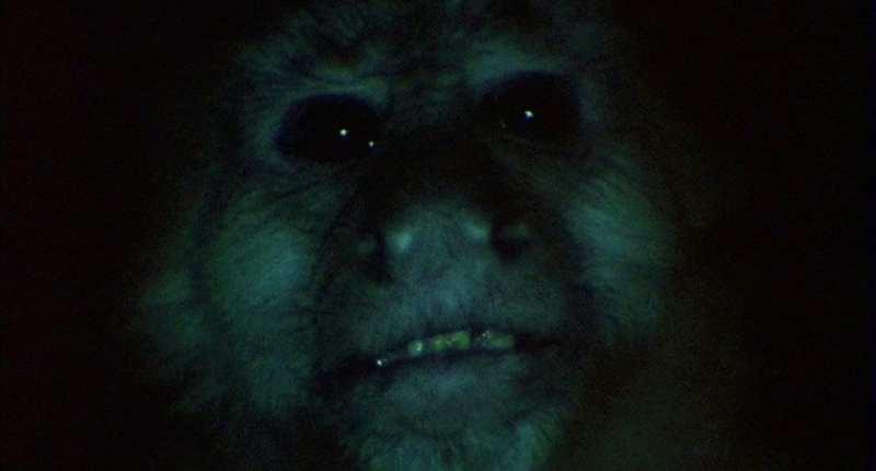 judy monkey