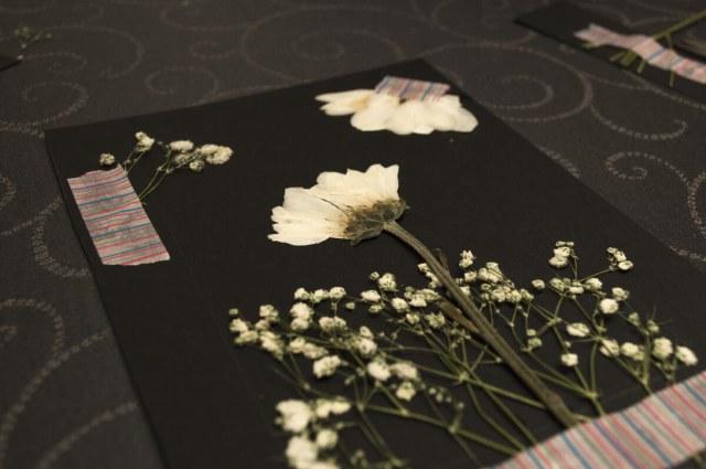 Composición de margaritas secas sobre cartulina negra