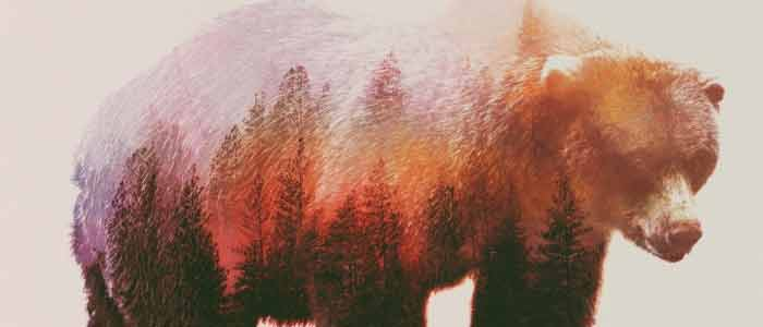 watanabe_animal_invierno