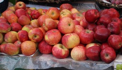 Auch Opfer vom Artensterben: der Apfel