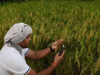 WISeKey, IPL to create cybersecurity-IoT ecosystem for farmers in India