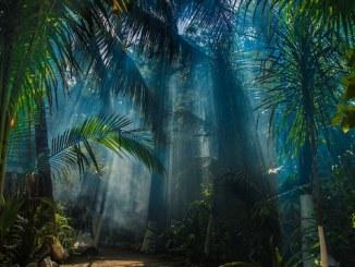 jungle OSS