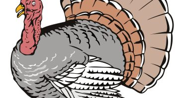 BSS, Turkeys and the Real-Time Magic Wands