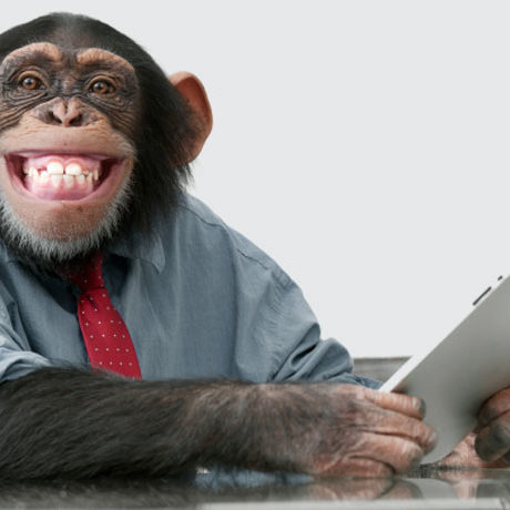 86  Why We're Basically Just Bonobos Monkeys with Better Tech
