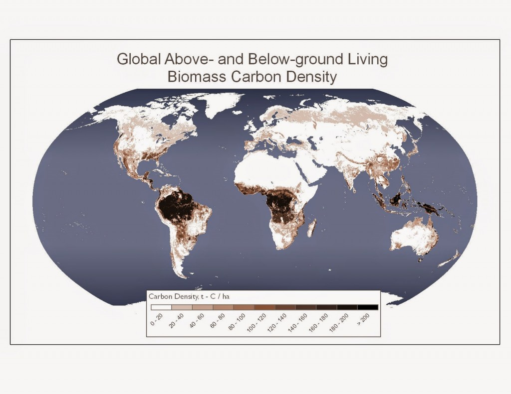 Living biomass carbon density