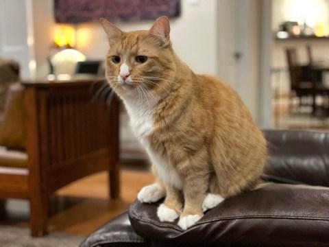 Sir Wobbles ponders