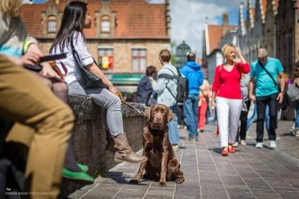distanbach-Bruges people-1