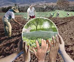 La educación como propuesta. Reflexiones desde la educación ambiental