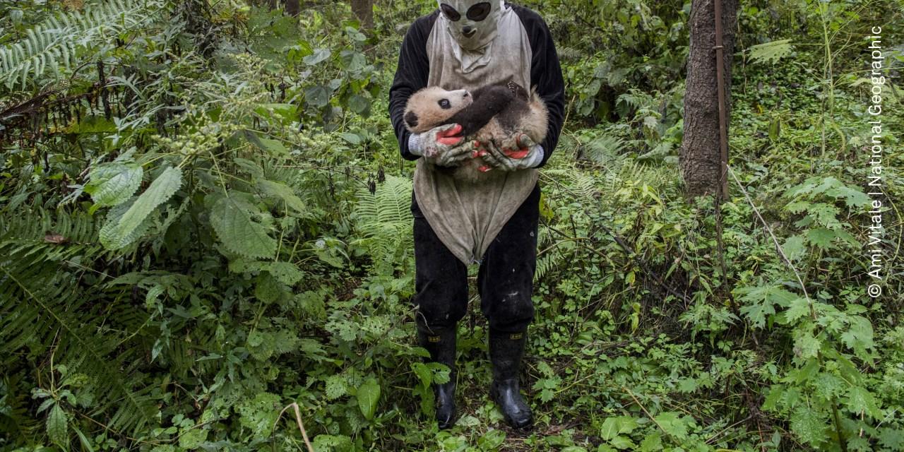 Llegó a México la World Press Photo, los premios Oscar de la fotografía