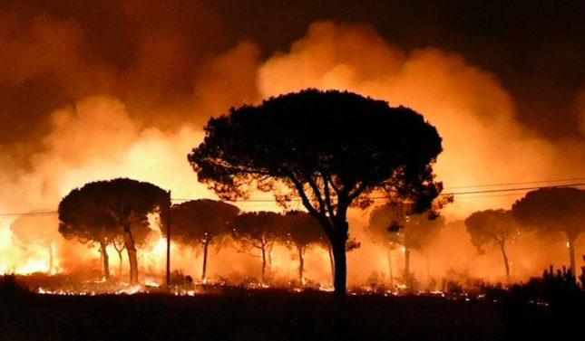 Agricultores de Huelva: ´No somos los culpables del Incendio de Doñana´