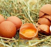 Grandes cadenas se comprometen a que huevos de marcas propias se produzcan con sistemas libres de jaula antes de 2025