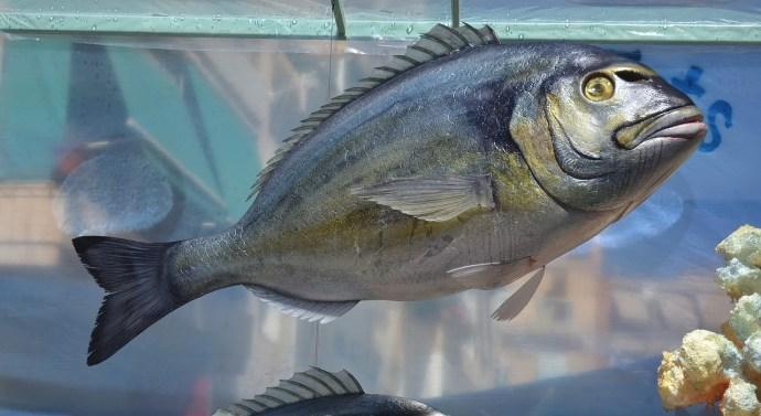 El cuidado de las piscifactorías, clave para las distribuidoras de pescado